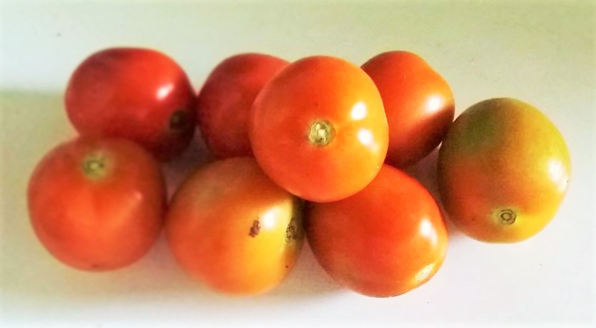 Tomat, Rp. 18.000 per Kg