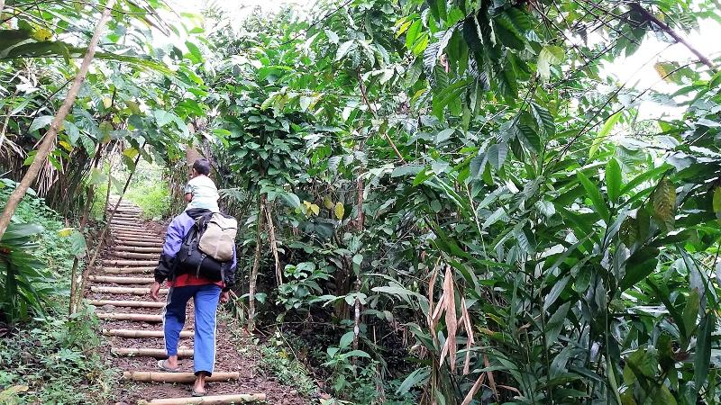 Naik naik ke Curug Ngebul tinggi, tinggi sekali.Kiri kanan kulihat hutan, banyak pohon kopi...