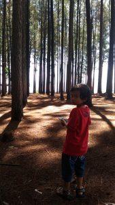 Pokland Lokasi Wisata Hutan Pinus Kabupaten Cianjur