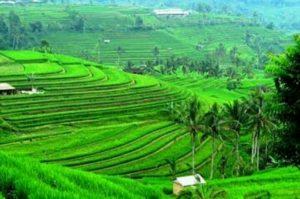 Kenapa Ingin ke Bali? Ikhlaskan, Bali bukan Jodohmu…