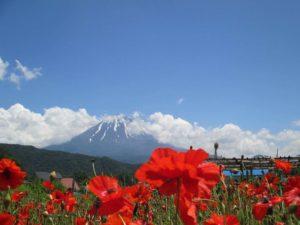 Menjelajah Negeri Sakura Yuk? Ada 5 Tempat Wisata Di Jepang Yang Cocok Untuk Travel Muslim Nih!