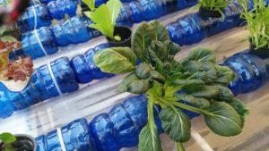 Cara Urban Farming Memanfaatkan Pekarangan Minimalis dengan Hasil Fantastis