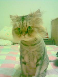 Kucing Ditambah SDM Eror Sama Dengan Kemenangan